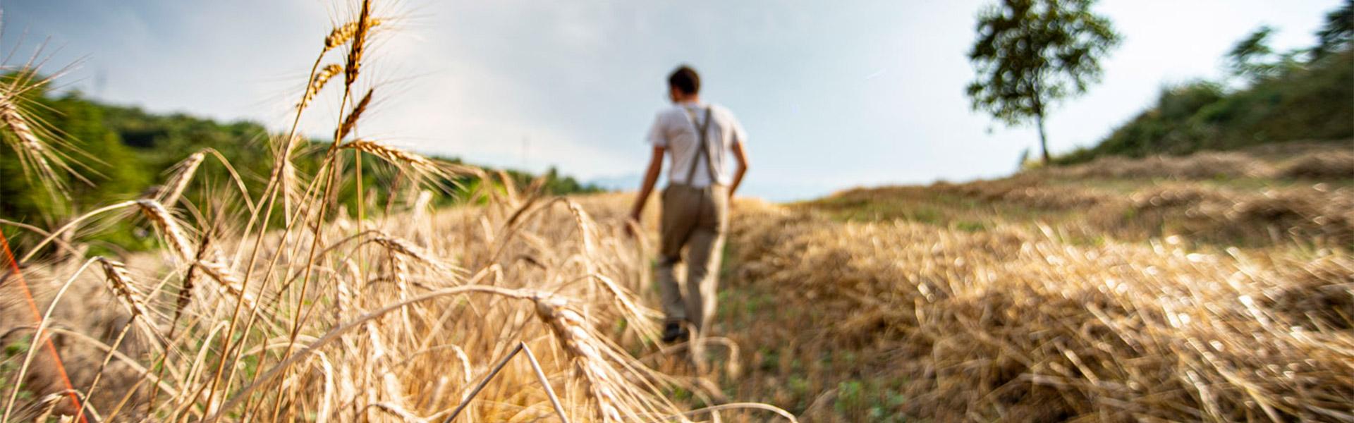 Passeggiata nei campi